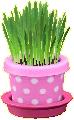 ネコぐさのピンクの画像