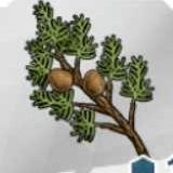 イトスギの枝