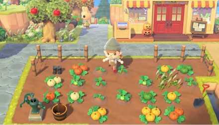 かぼちゃの苗を地面に埋めて育てる