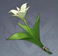 セシリアの花画像