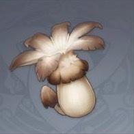 Philanemo Mushroom Image