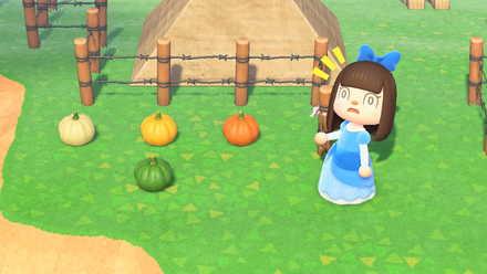 かぼちゃを飾る