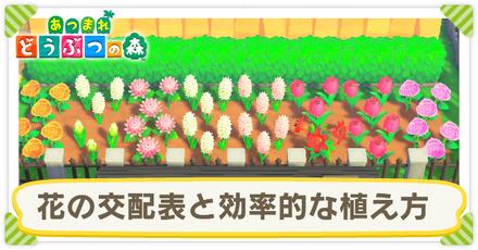 あつ 森 花 の 交配 効率 【あつ森】花交配のポイント紹介!効率的なやり方解説