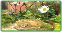 続・草花の楽園