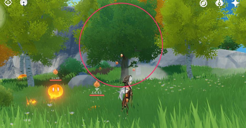 夕暮れの実の木の特徴.png