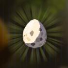 トリのタマゴ画像