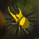 ガンバリカブト画像