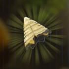 ボコブリンの角画像
