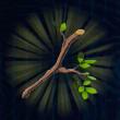 木の枝画像