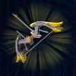 オオワシの弓画像