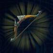 旅人の弓画像