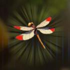 ポカポカヤンマ画像