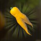 Endura Carrot Icon