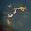 ハヤブサの弓画像