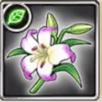 キレイ花の画像